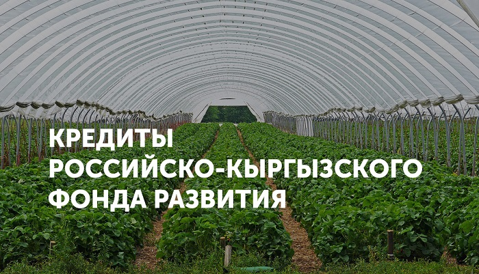strawberry-field-3318639_1280